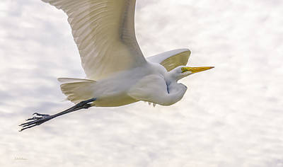 Yellow Beak Photograph - Soaring High Great Egret by Julie Palencia
