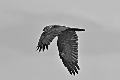 Photograph - Soaring High by Ramabhadran Thirupattur