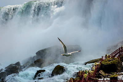 Photograph - Soaring In The Mist by Pat Scanlon