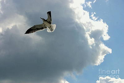 Art Print featuring the photograph Soaring by Jeanne Forsythe