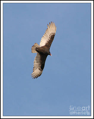 Photograph - Soaring On The Thermals by Mariarosa Rockefeller