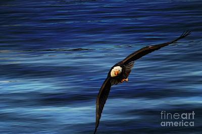 Photograph - Soaring Over Water by Gail Bridger