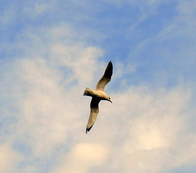 Photograph - Soaring Overhead by Kay Novy