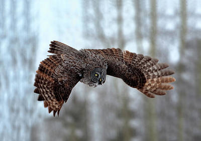 Wild Animals Photograph - Soaring by Peter Stahl