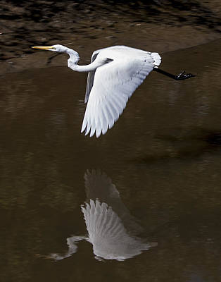 Photograph - Soaring Reflection by Paula Porterfield-Izzo