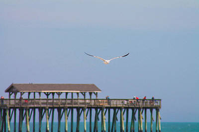 Photograph - Soaring Seagull by Jessica Brown