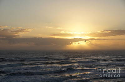 Ocean Photograph - Soaring Sunrise by Megan Cohen