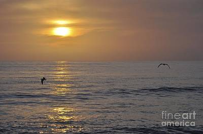 Photograph - Soaring Sunset by Bridgette Gomes
