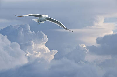 Photograph - Soaring With The Clouds by Paul Miller
