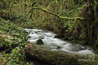 Photograph - Soda Creek by Stuart Gordon