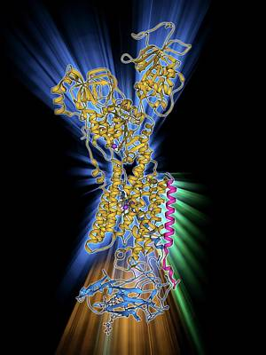 Sodium-potassium Ion Pump Protein Art Print by Laguna Design