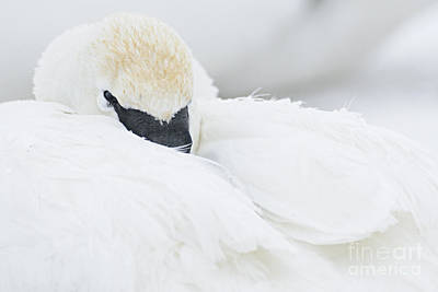 Photograph - Soft And Fluffy by Larry Ricker