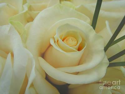 Photograph - Soft And Lovely by Renee Trenholm