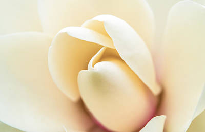 Beaches And Waves Rights Managed Images - Soft as Magnolia Royalty-Free Image by Nina Lin