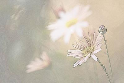 Soft Aster Art Print