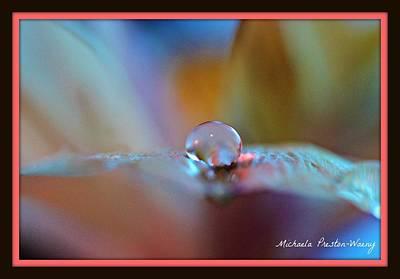 Photograph - Soft Beauty by Michaela Preston