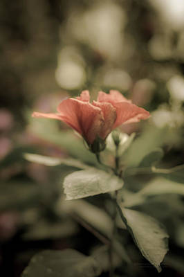 Photograph - Soft Beauty by Tex Wantsmore