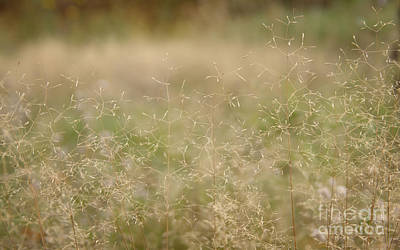 Soft Bent Grass Art Print by Jolanta Meskauskiene