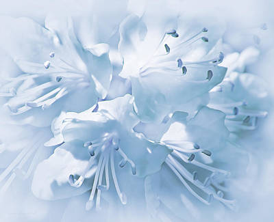 Photograph - Soft Blue Azalea Flowers by Jennie Marie Schell