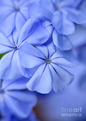 Photograph - Soft Blue by Sabrina L Ryan