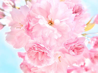 Photograph - Soft Blue Sky With Pink Flowers by Marianna Mills