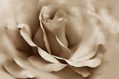 Photograph - Soft Brown Ballerina Rose Flower by Jennie Marie Schell
