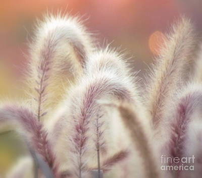 Photograph - Soft Care by France Laliberte