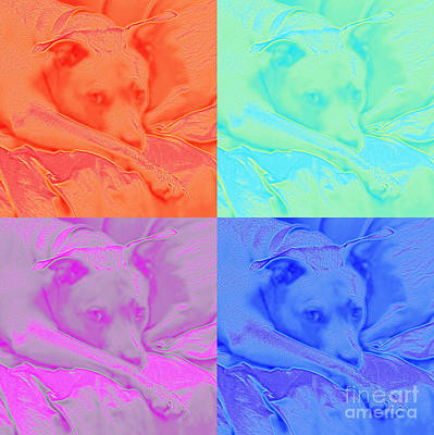 Photograph - Soft Colors Of A Pit Bull by Renee Trenholm