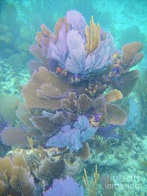 Photograph - Soft Coral by Adam Jewell