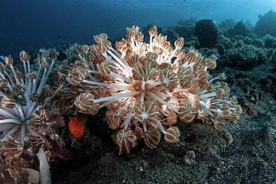 Soft Coral Art Print by Ethan Daniels