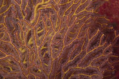 Soft Coral Polyps Feeding, Beqa Lagoon Art Print by Terry Moore