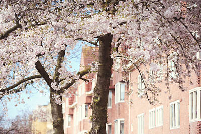 Abstract Male Faces - Soft Dreams. Pink Spring in Amsterdam by Jenny Rainbow