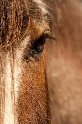 Photograph - Soft Eyes by Kristia Adams