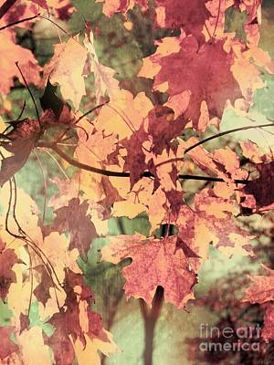 Photograph - Soft Fall by France Laliberte