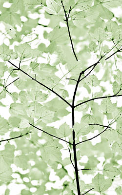 Photograph - Soft Forest Green Leaves Melody by Jennie Marie Schell