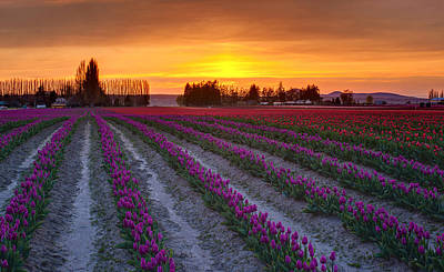 Skagit Photograph - Soft Glow Of Spring by Mike Reid