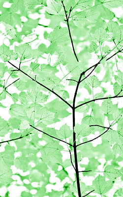 Photograph - Soft Green Leaves Melody by Jennie Marie Schell
