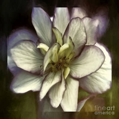 Photograph - Soft Harmony by Jean OKeeffe Macro Abundance Art