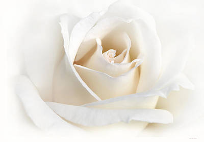 White Flowers Photograph - Soft Ivory Rose Flower by Jennie Marie Schell