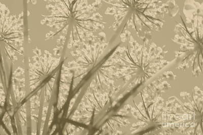 Photograph - Soft Lace 1 by Tim Good