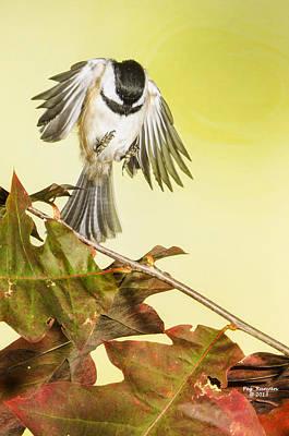 Photograph - Soft Landing by Peg Runyan