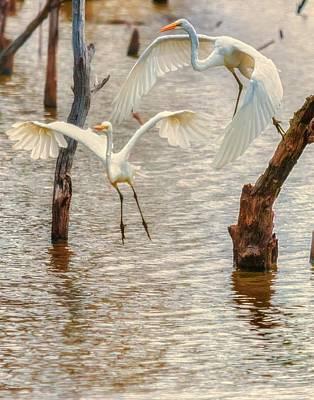 Soft Landing Two Egrets Art Print