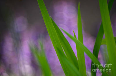 Photograph - Soft Lavender Green by Adria Trail