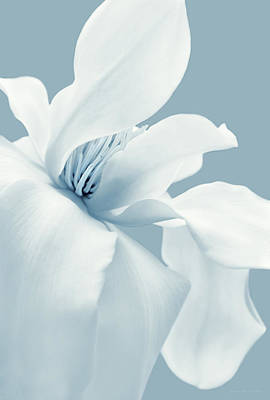 Photograph - Lady Sings The Blues White Magnolia Flower  by Jennie Marie Schell