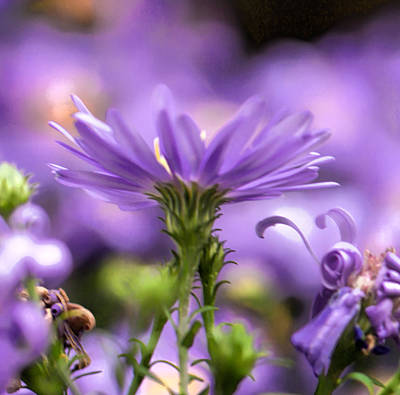 Art Print featuring the photograph Soft Lilac by Leif Sohlman