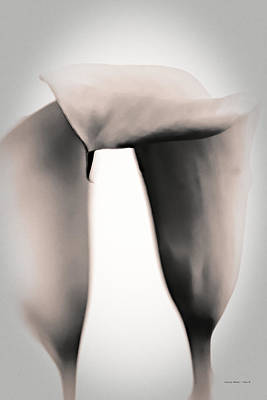 Photograph - Soft Lilies II by Charles Muhle