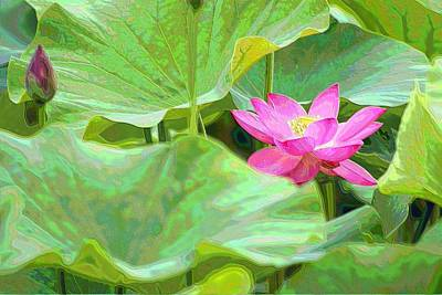 Photograph - Soft Lotus by Carol Montoya