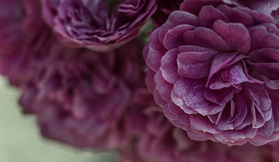 Photograph - Soft Melody by Julie Andel