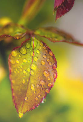Photograph - Soft Morning Rain by Stephen Anderson