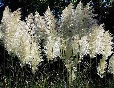 Photograph - Soft Pampas by Suzy Piatt